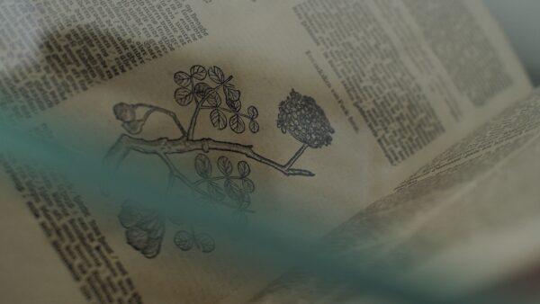 Expo Eeuw van Verwondering Museum Plantin Moretus Nova Reperta Geerdt MAgiels